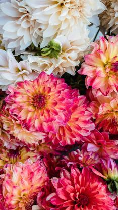 鲜花 花朵 花簇 密集
