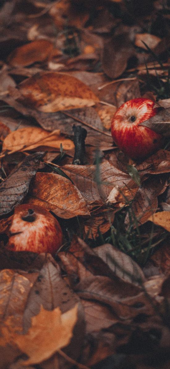 水果 苹果 落叶 枯叶