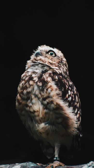 鸟类 猫头鹰 夜视 羽毛
