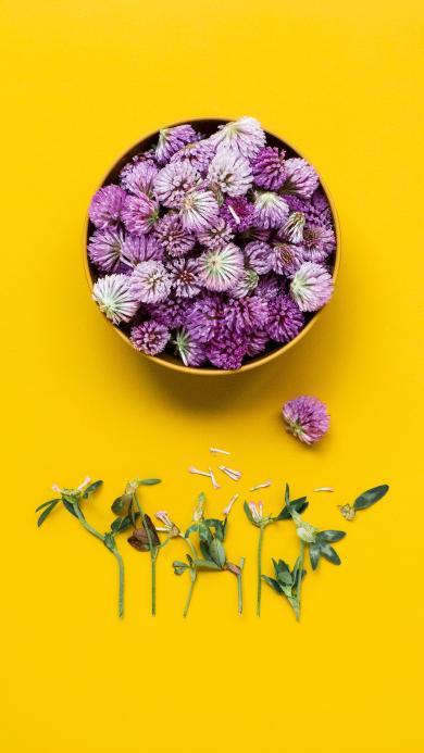 鲜花 菊花 花瓣 花朵