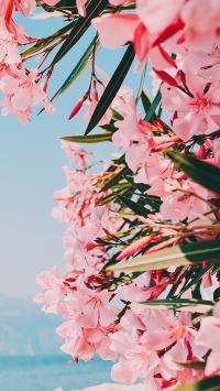 花季 盛开 鲜花 花簇