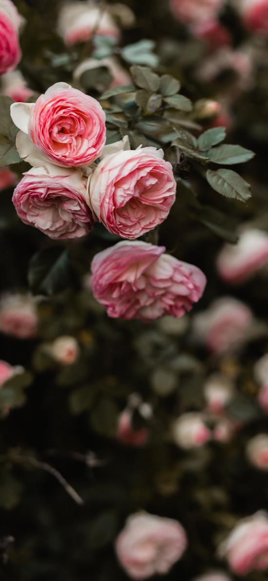 鲜花 花季 盛开 枝叶