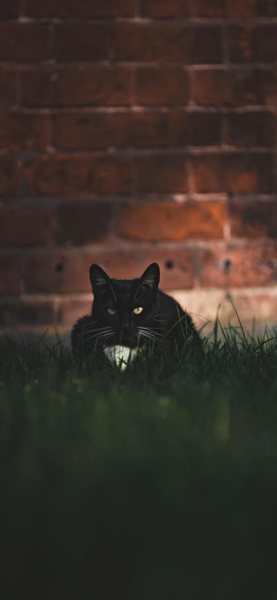 草地 宠物 猫咪 黑猫