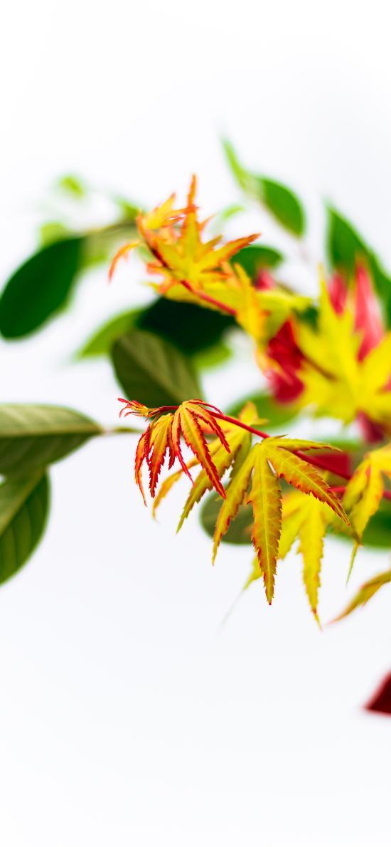 枝叶 绿叶 新芽 生命