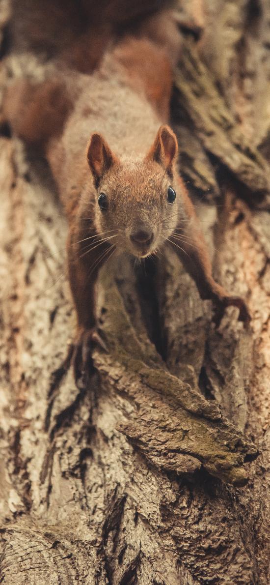 树木 树干 松鼠 棕色