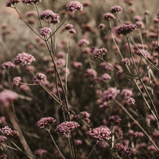 野花 花簇 盛开 花季