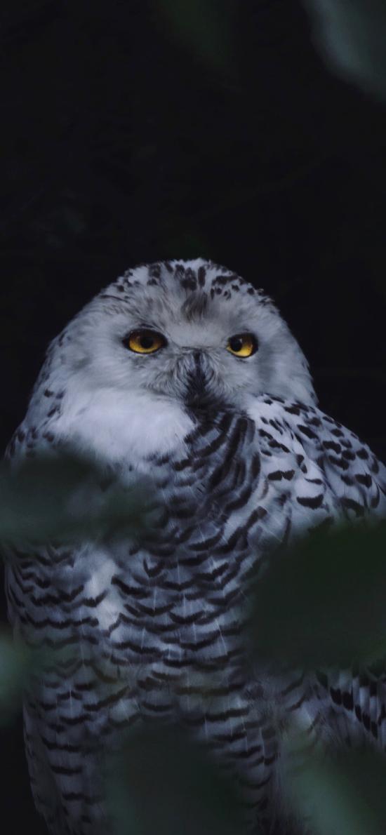 猫头鹰 夜视 羽毛 鸟类