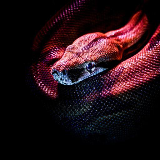 蛇 冷光 光线 爬行 冷血
