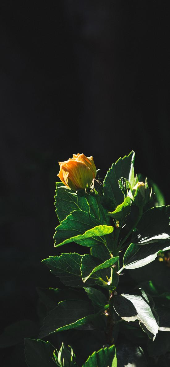 枝头 枝叶 花朵 花苞