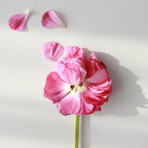 鲜花 层叠 花朵 花瓣