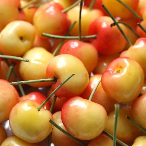 樱桃 水果 新鲜 黄樱桃