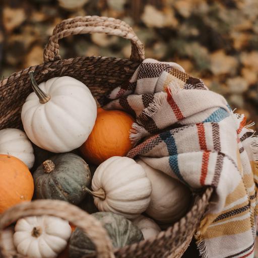 南瓜 编织篮 品种 食材