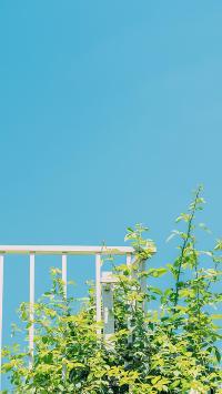 枝叶 蓝天 天空 绿叶