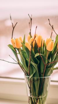 花束 鲜花 郁金香 枝叶