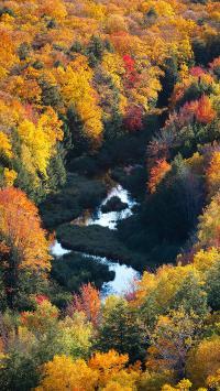 秋季 树木 树叶 枯黄 水流