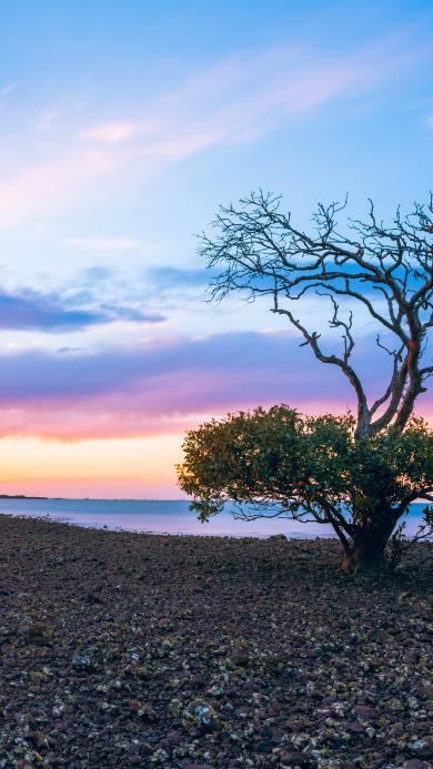 渐变 唯美 天空 树木