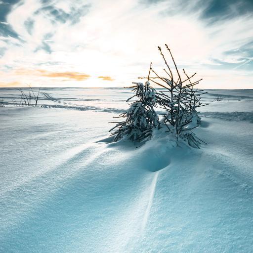 雪季 雪地 树木 天空 唯美