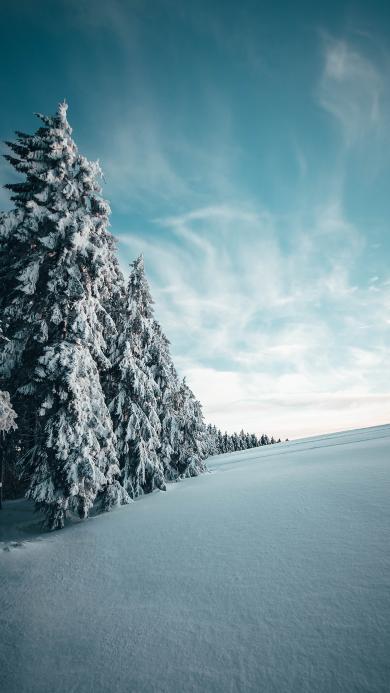 雪地 雪季 树木 天空