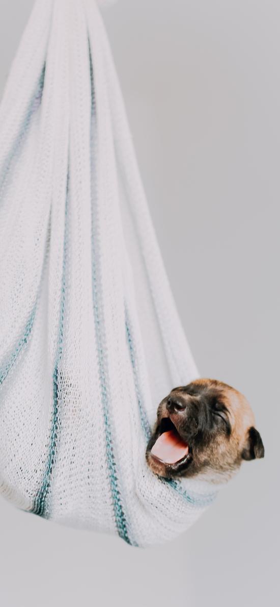 小狗 幼仔 悬挂 毛巾