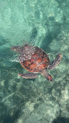 海龟 大海 海洋 清澈