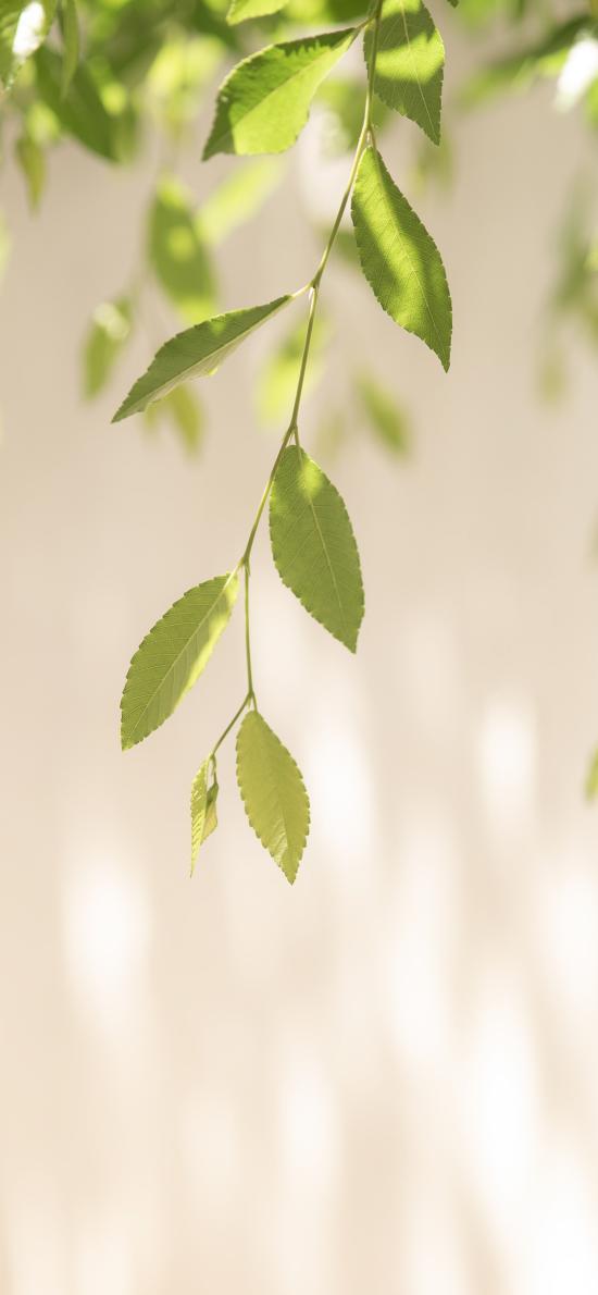 树叶 枝叶 阳光 光影