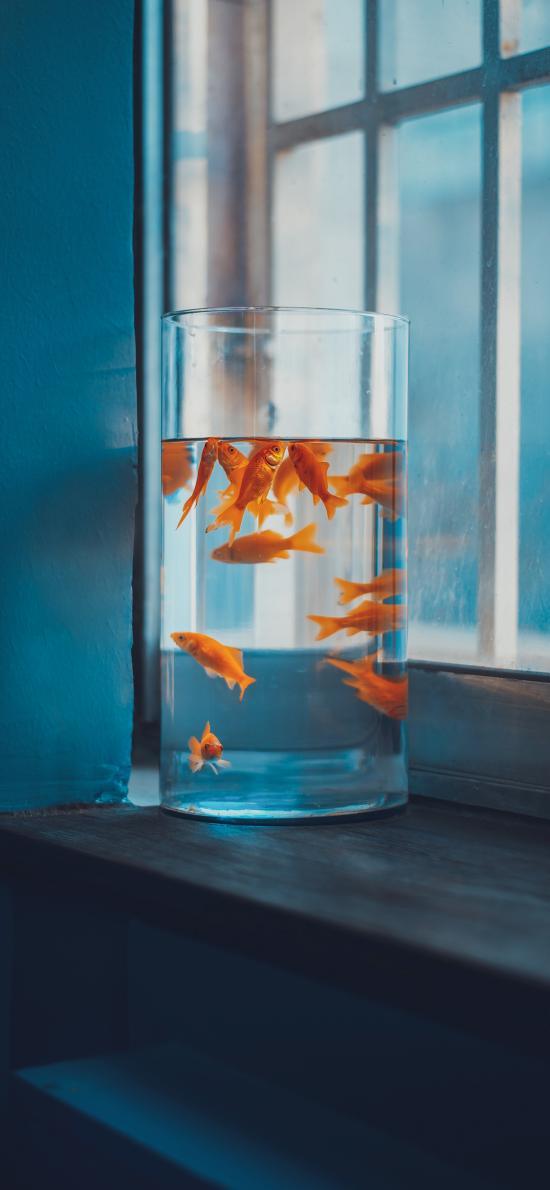 鱼缸 摆放 窗台 金鱼