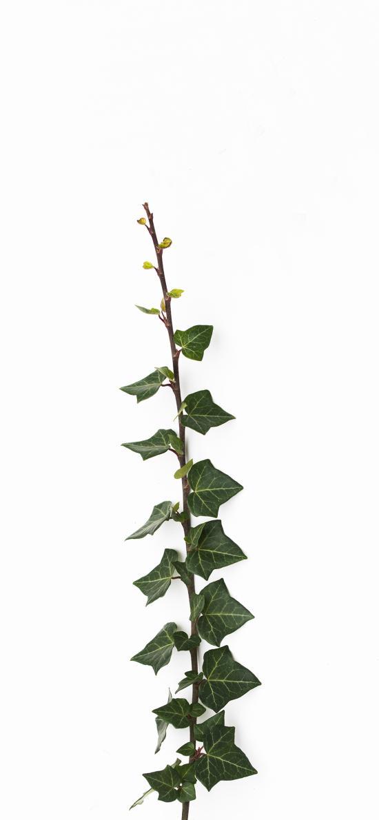 枝叶 藤蔓 绿植 绿化