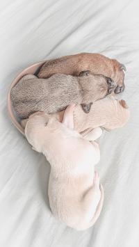 小狗 幼仔 花色 堆积