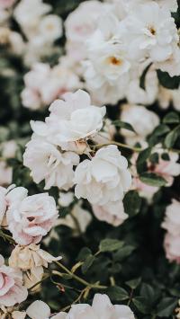 鲜花 花季 盛开 花朵