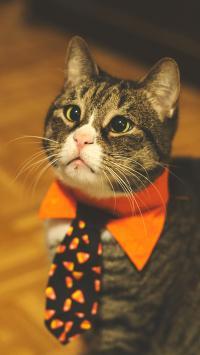 猫咪 蝴蝶结 宠物 领带