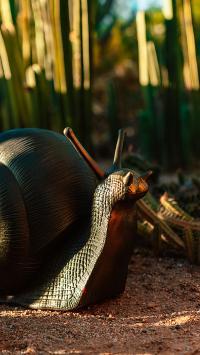 静物 蜗牛 雕塑 饰品