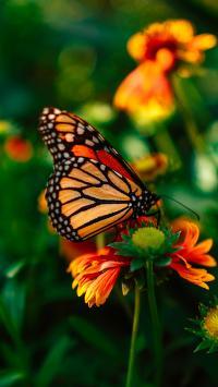 蝴蝶 鲜花 雏菊 花粉