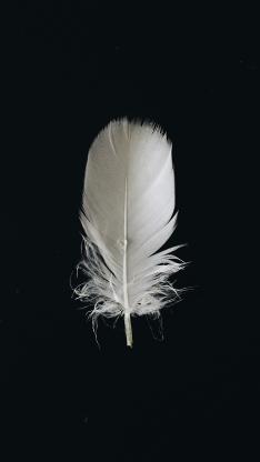 黑色背景 静物 羽毛 白色