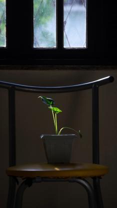 家居 椅子 盆栽 绿植