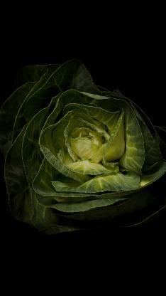 绿植 卷心菜 蔬菜 食材