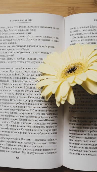 静物 菊花 非洲菊 书籍