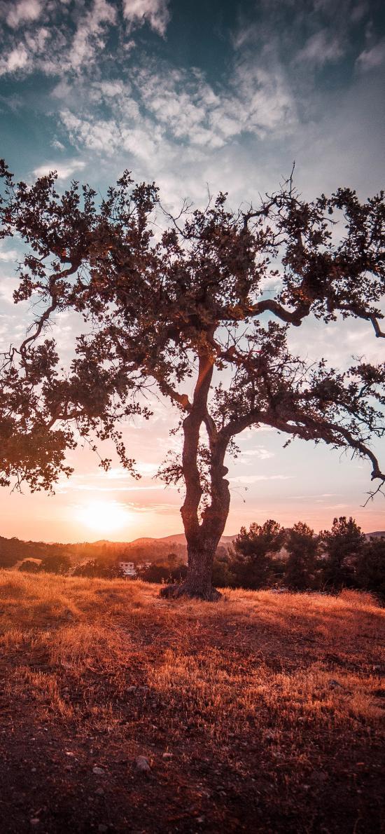 草地 树木 树干 阳光