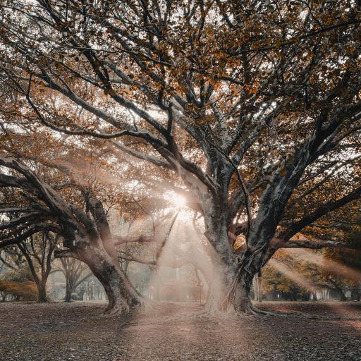 大暑 阳光 射线 秋季 落叶