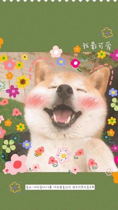 宠物狗 柴犬 可爱 小花