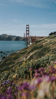 郊外 草坪 鲜花 美景 金山大桥