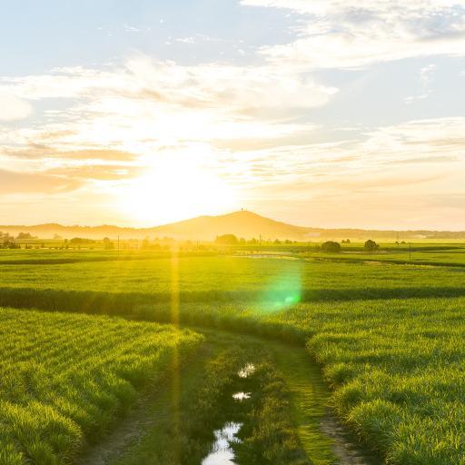 阳光 田野 种植 农田