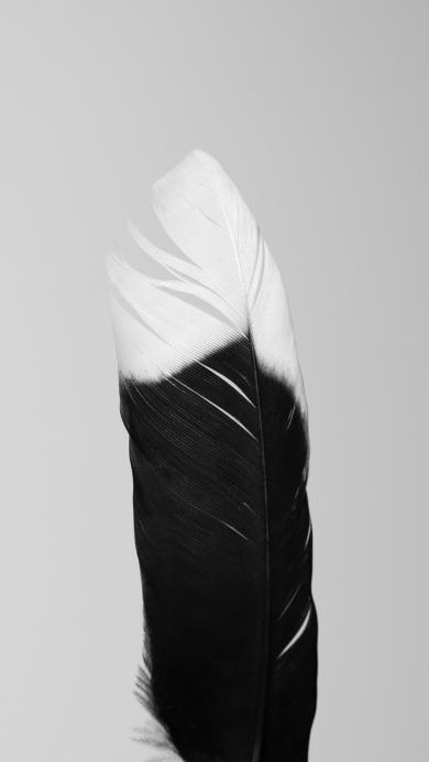 羽毛 饰品 黑白 染色