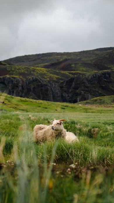 放牧 草地 牧羊 羊群