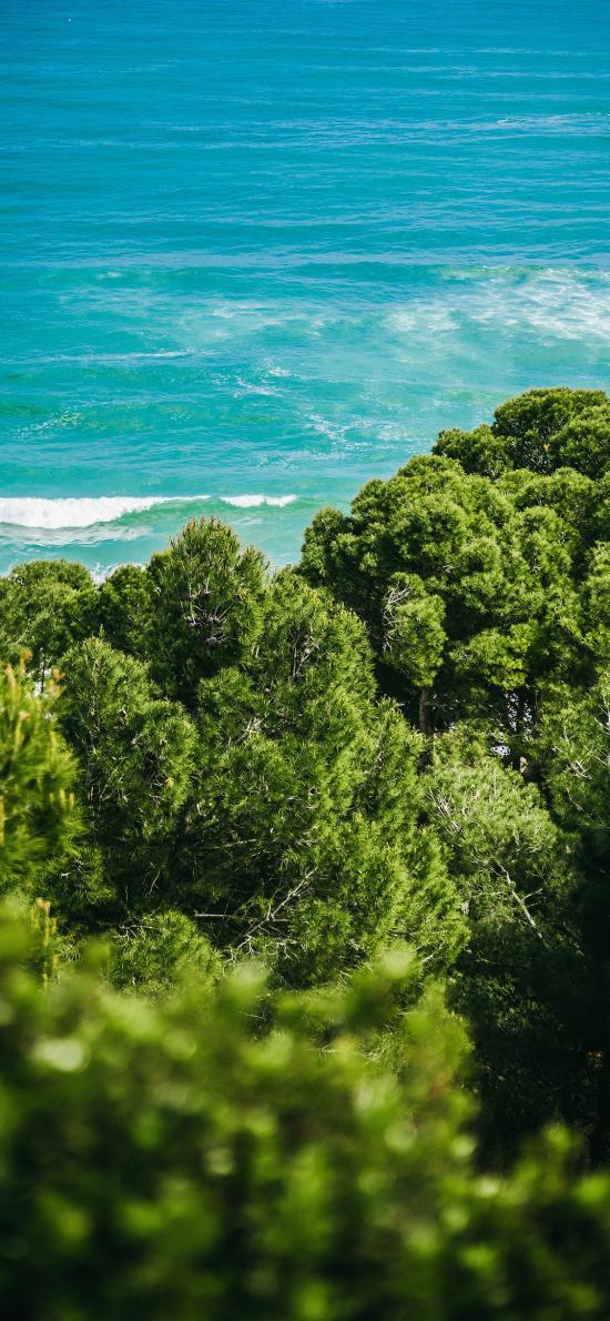 海岸 海边 树林 海浪