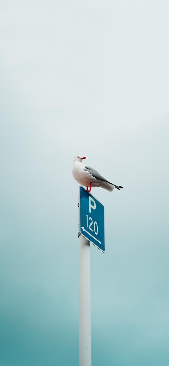 鸽子 鸟类 站立 路牌