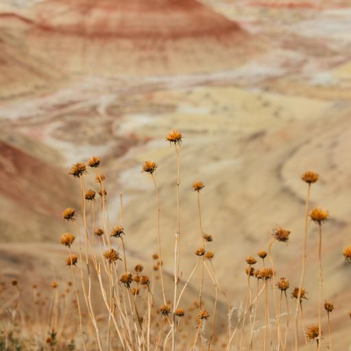 野花 自然 隔壁 荒漠