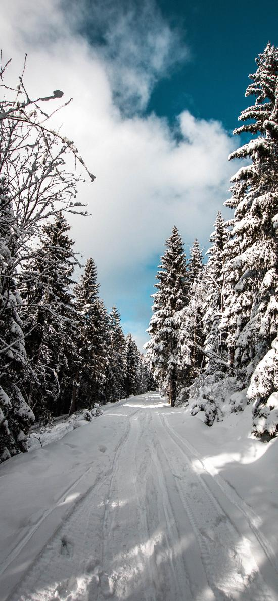 郊外 蓝天白云 雪景 树木 白雪覆盖