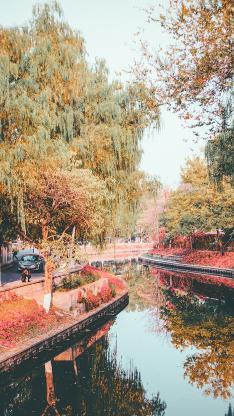河道 水面 树木 秋季 落叶