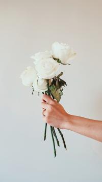 鲜花 白玫瑰 盛开 纯洁