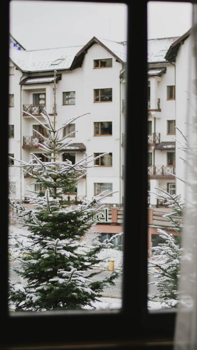 窗外 冬季 松树 白雪